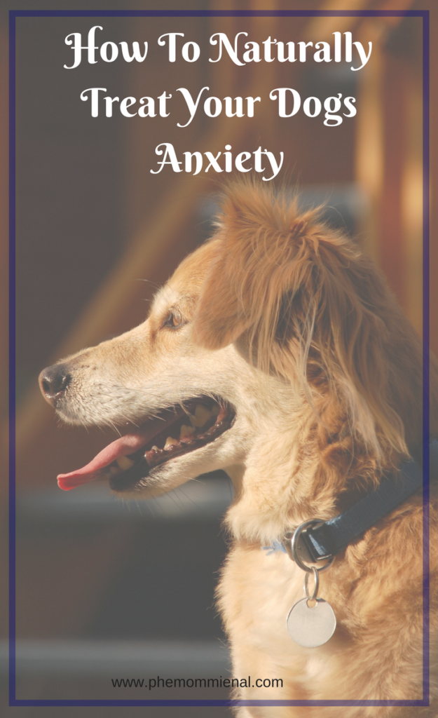 How To Naturally Treat Dog Anxiety