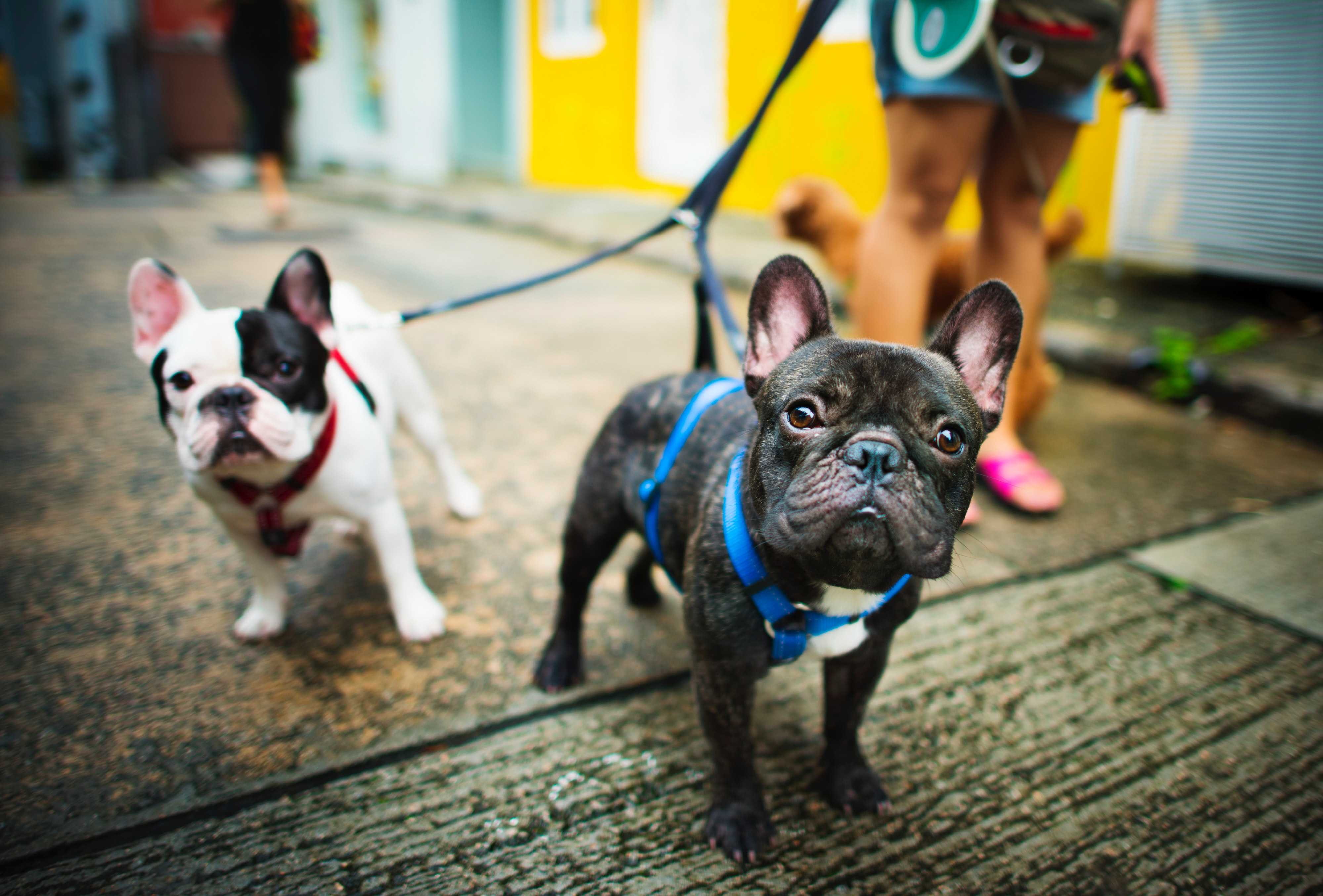 Top 10 Cities to Live in for Pet Lovers - Phemommienal
